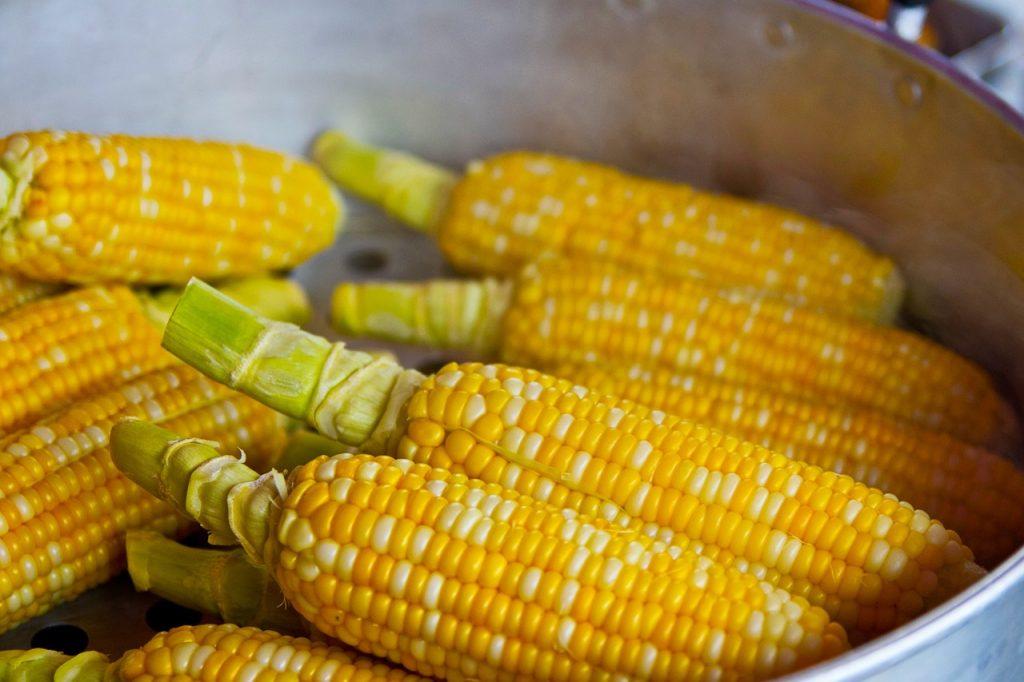 CornGarden 1024x682 - 4 Tips to Gardening in Central Florida