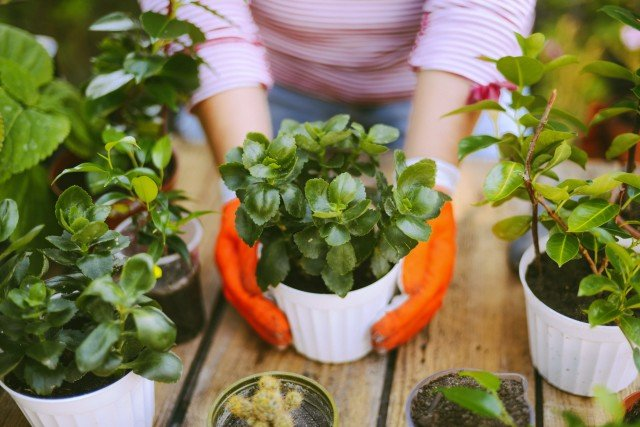 Gardening - 4 Tips to Gardening in Central Florida