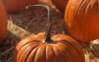 20 Autumn Pumpkin Crafts Ideas for Adults