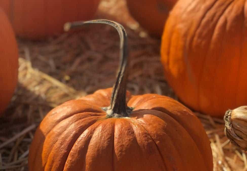 20 Autumn Pumpkin Crafts Ideas for Adults