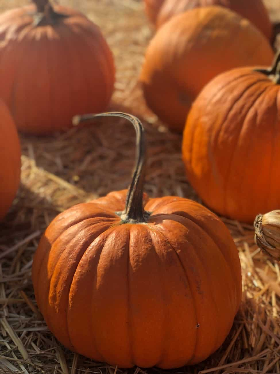 Autumn Pumpkin Crafts Ideas for Adults